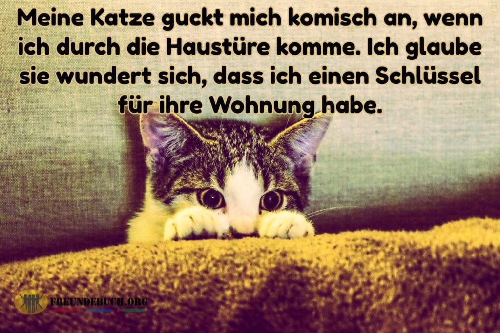 Katze Spruch Freundebuch