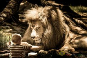 Löwe Freundebuch Kindergarten